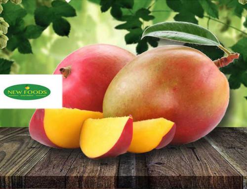 WordPress Website Design New Foods Fruit