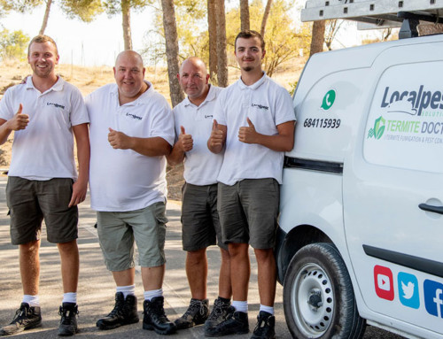 Marbella Pest Control Services Local Pest