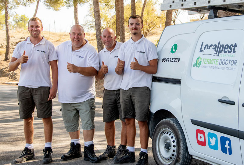 marbella pest control servcies local pest marbella wordpress website designers
